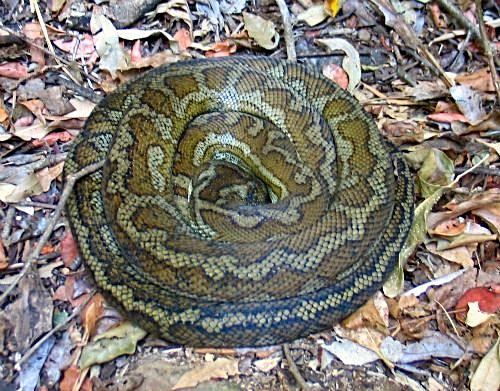 python_2031