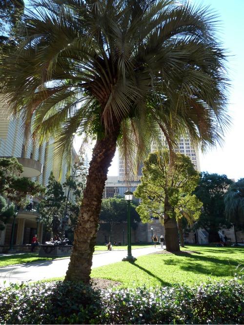 Town+Bris Palm_0443