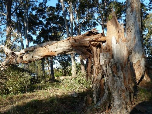 Trees snapped like match sticks
