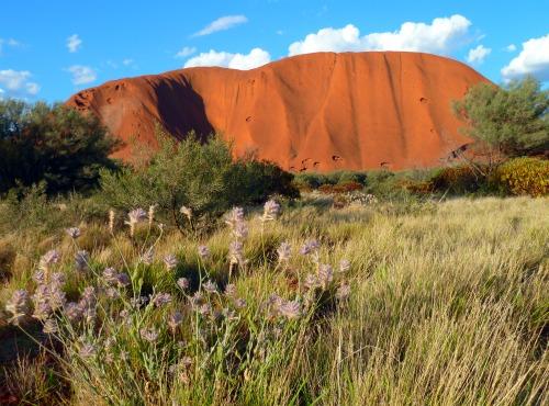 Uluru Ayers Rock Australia with wildflowers image