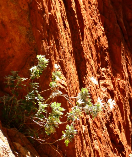 Wild flowers Standly Chasm