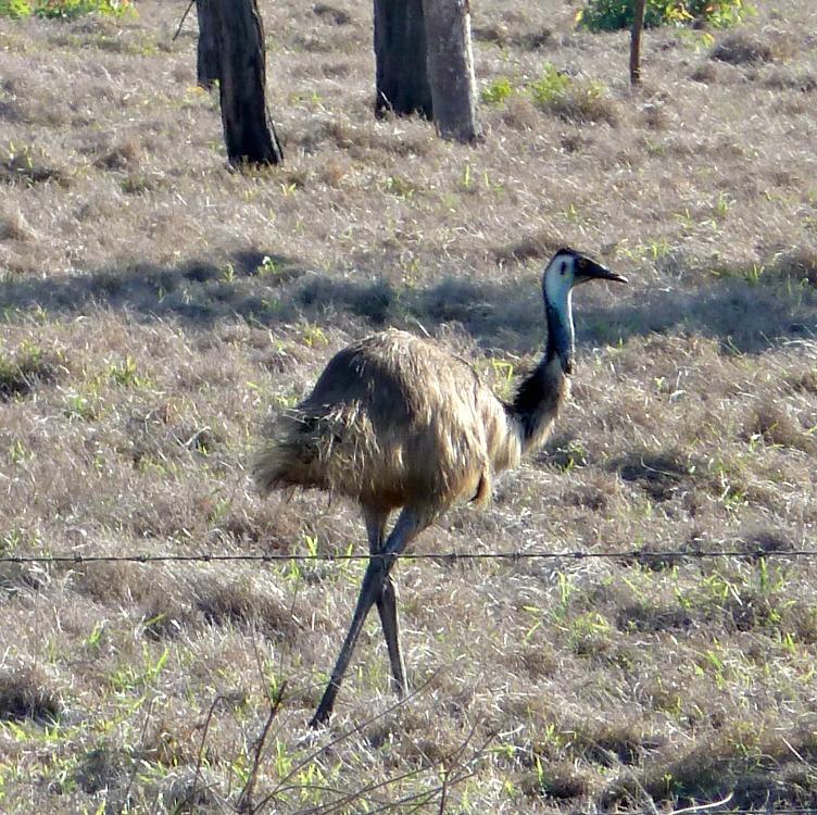 Image Emu