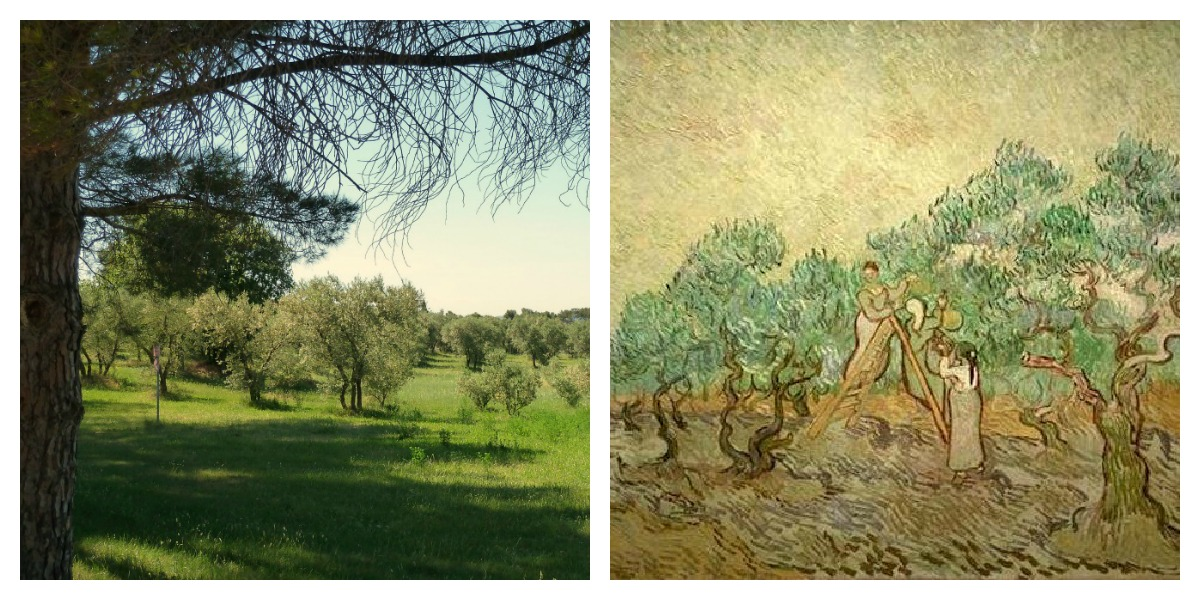 Van Gogh Olive Picking Saint-Rémy