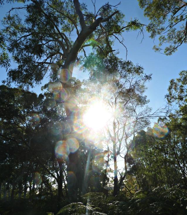 Australian Sunlight