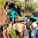 Bush Tucker Tales and Horse Riding with Traditional Owner Jerry Kelly in Tennant Creek