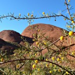 Kata Tjuta - Valley of the Winds - Across the Open Plain