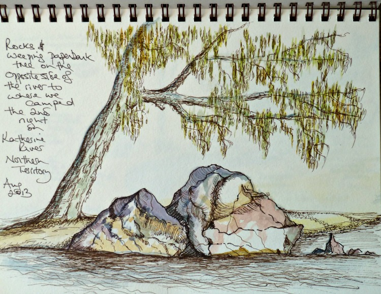 Weeping paperbark tree sketch