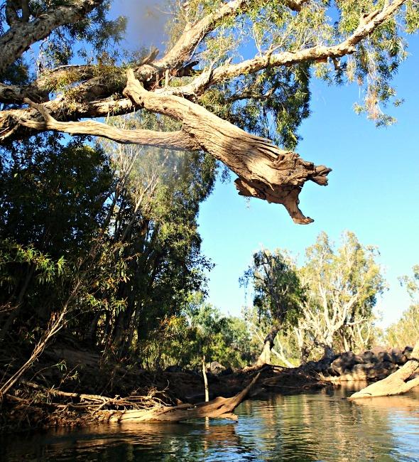 Katherine River debris wet season