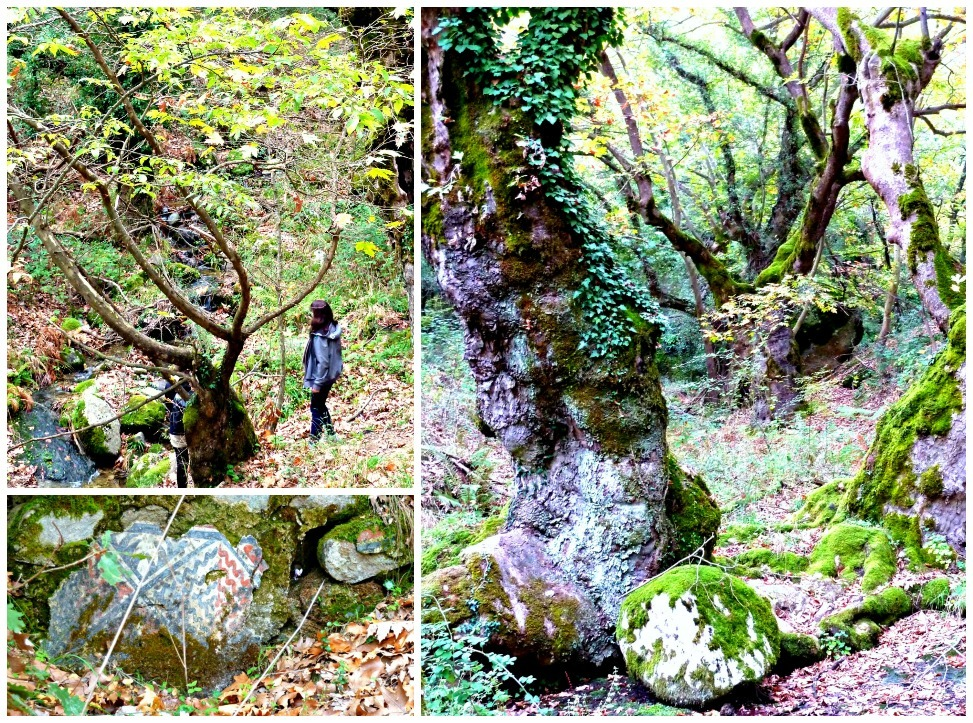 Ancient woodland on the way to Meteora