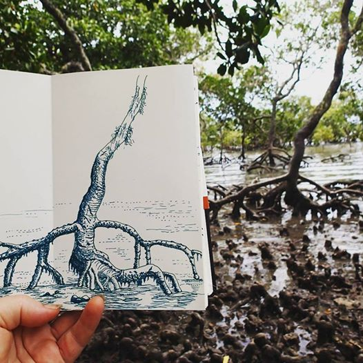 Doing a morning sketch down in the mangroves