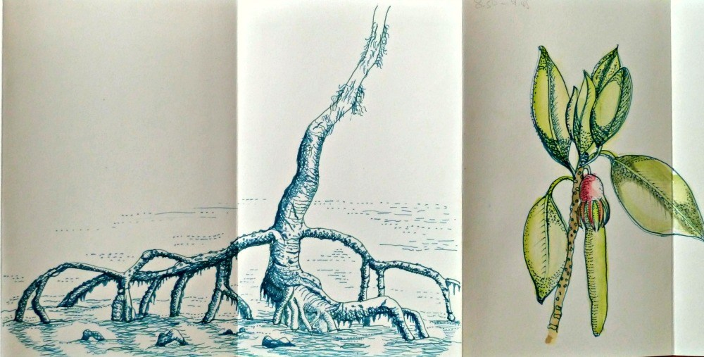 Hand drawing of mangrove roots