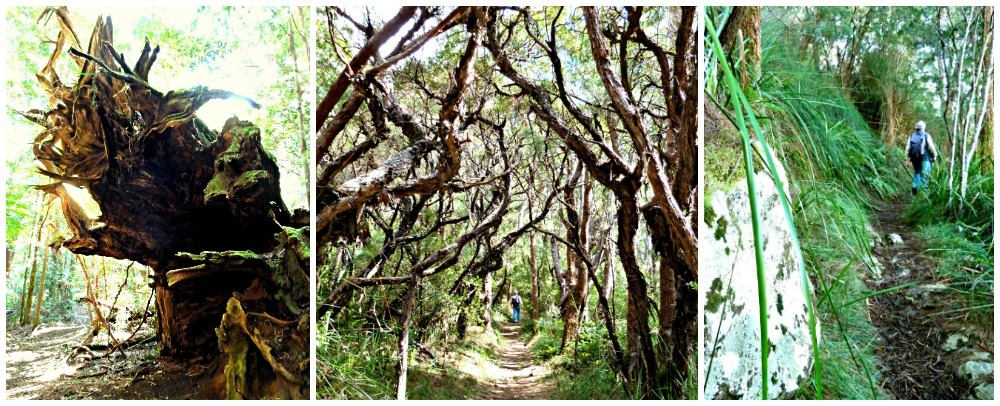 Natural vegetation on the Binna Burra Walk around Daves Creek Circuit in the Lamington National Park