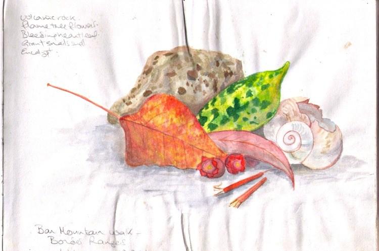 sketchbook watercolour of rainforest leaves