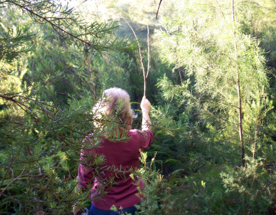 Using a stick to clear spiders out of the way on a bush walk