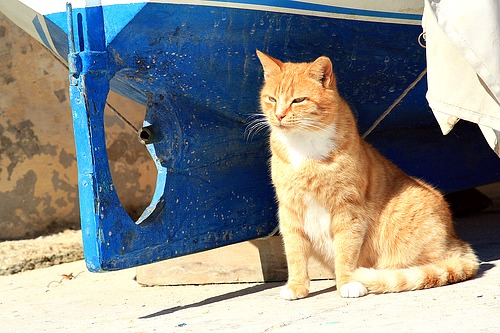 Cat soaking up the spring sunshine in Malta