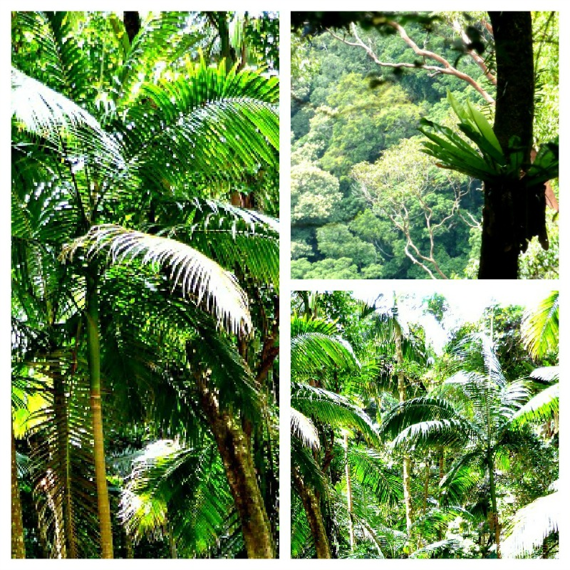 I feel an innate sense of being at one with nature when in the rainforest - this is called biophilia