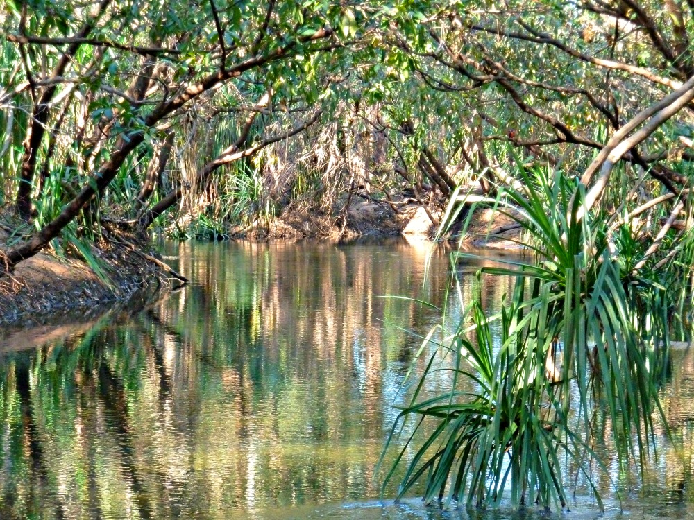 Katherine River pandanus
