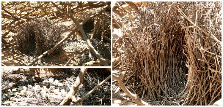 Bowerbird Nest