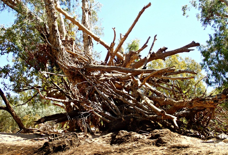 Katherine River debris