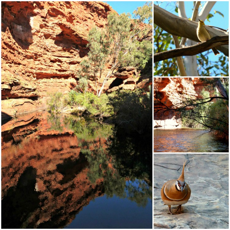 Garden of Eden at Kings Canyon