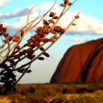 The Ultimate 6 Day Guide to Uluru, Kata Tjuta & Watarrka National Parks