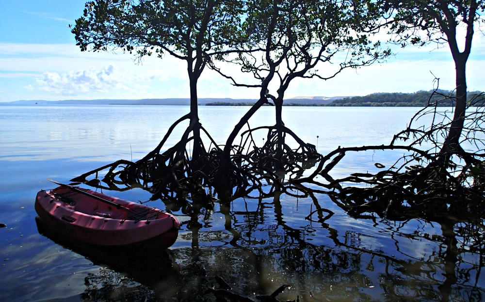 Kayak in the mangroves of Moreton Bay