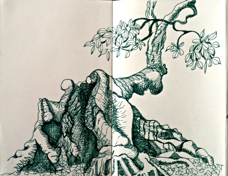 Drawing of a Mangrove trunk