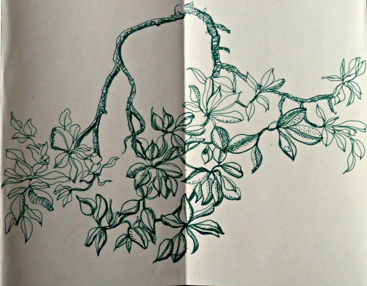 Hand drawing of a mangrove branch