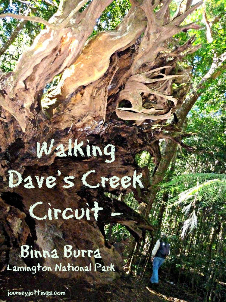 Walking Daves Creek Circuit at Binna Burra in the Lamington National Park, SE Queensland Australia