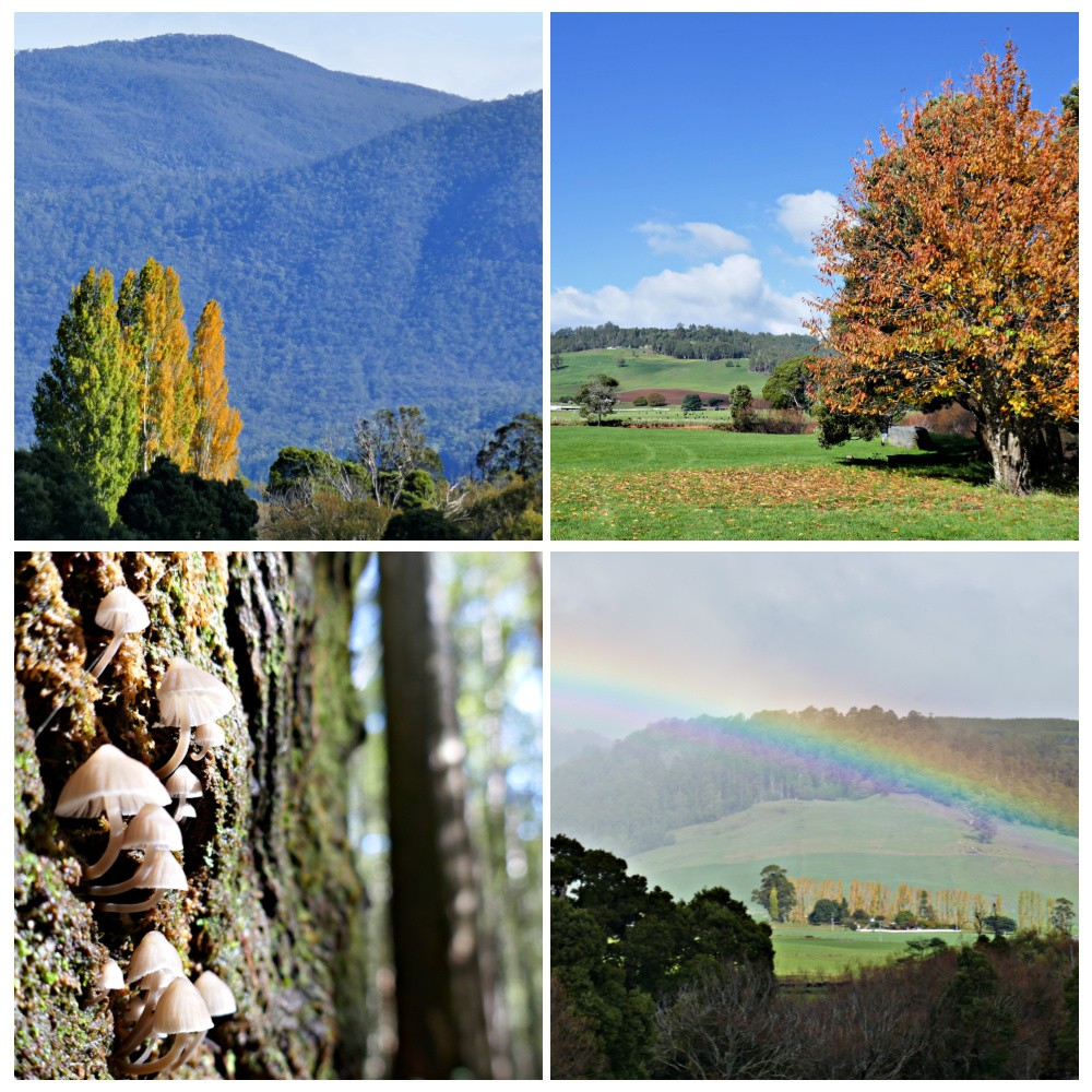 A collage of 4 images showing autumn trees toadstools and a rainbow across a valley