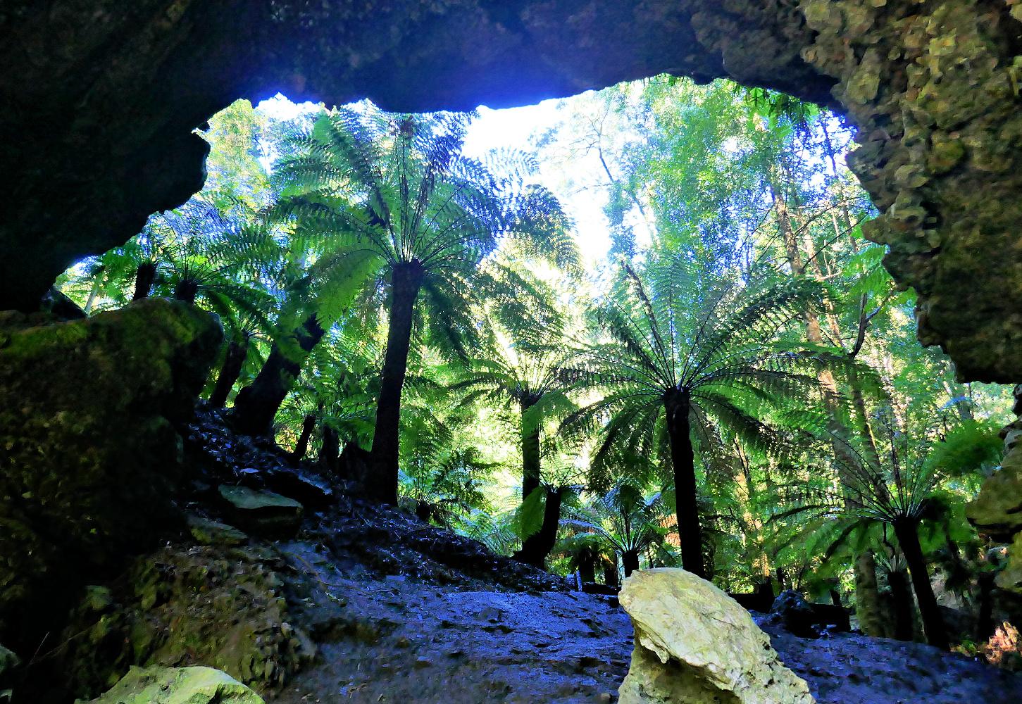 Tree ferns at Trowutta Arch
